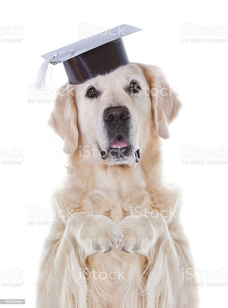 Dog with hat royalty-free stock photo