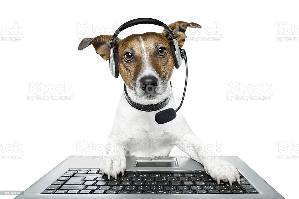 dog with headset and a pc stock photo