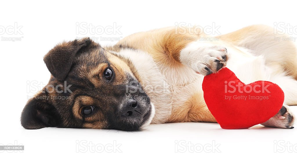 Dog with heart. stock photo