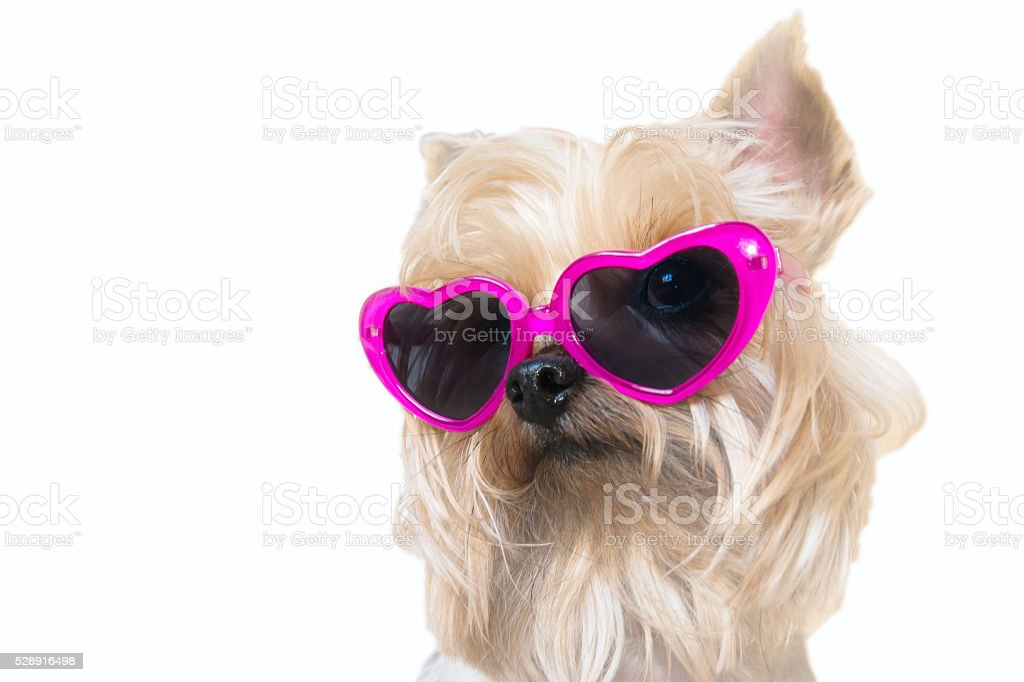 Dog with heart shaped sunglasses stock photo