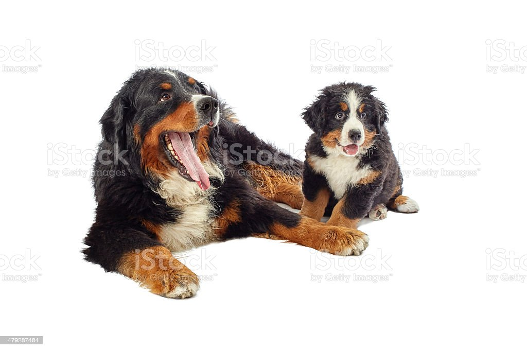dog with his puppy stock photo