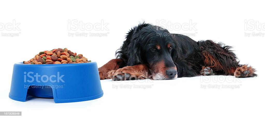 Dog with lack of appetite royalty-free stock photo