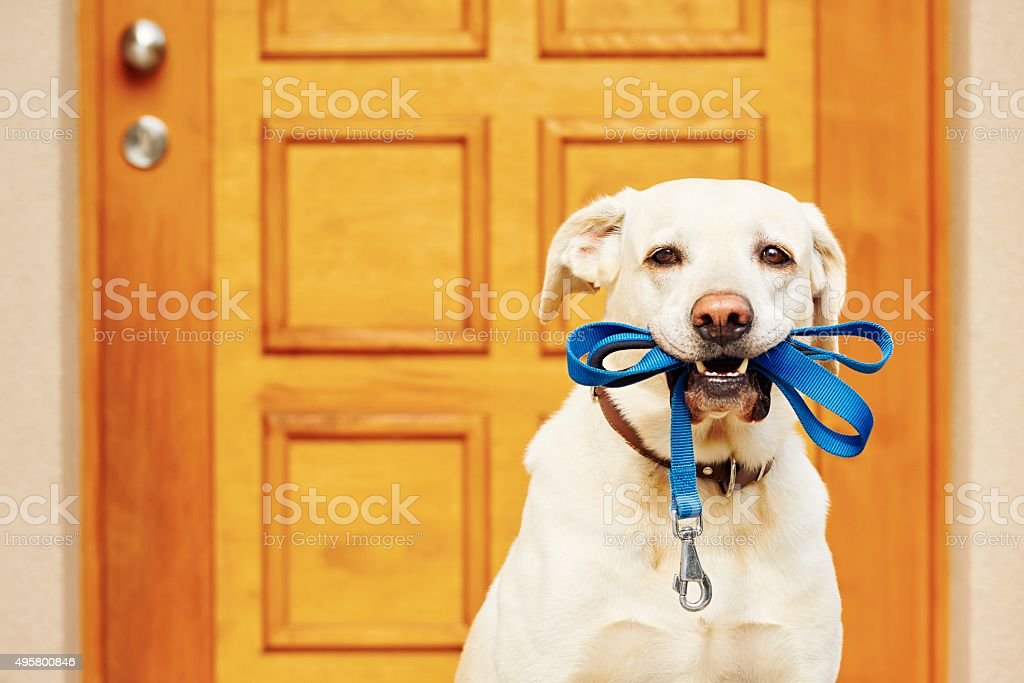 Dog with leash stock photo