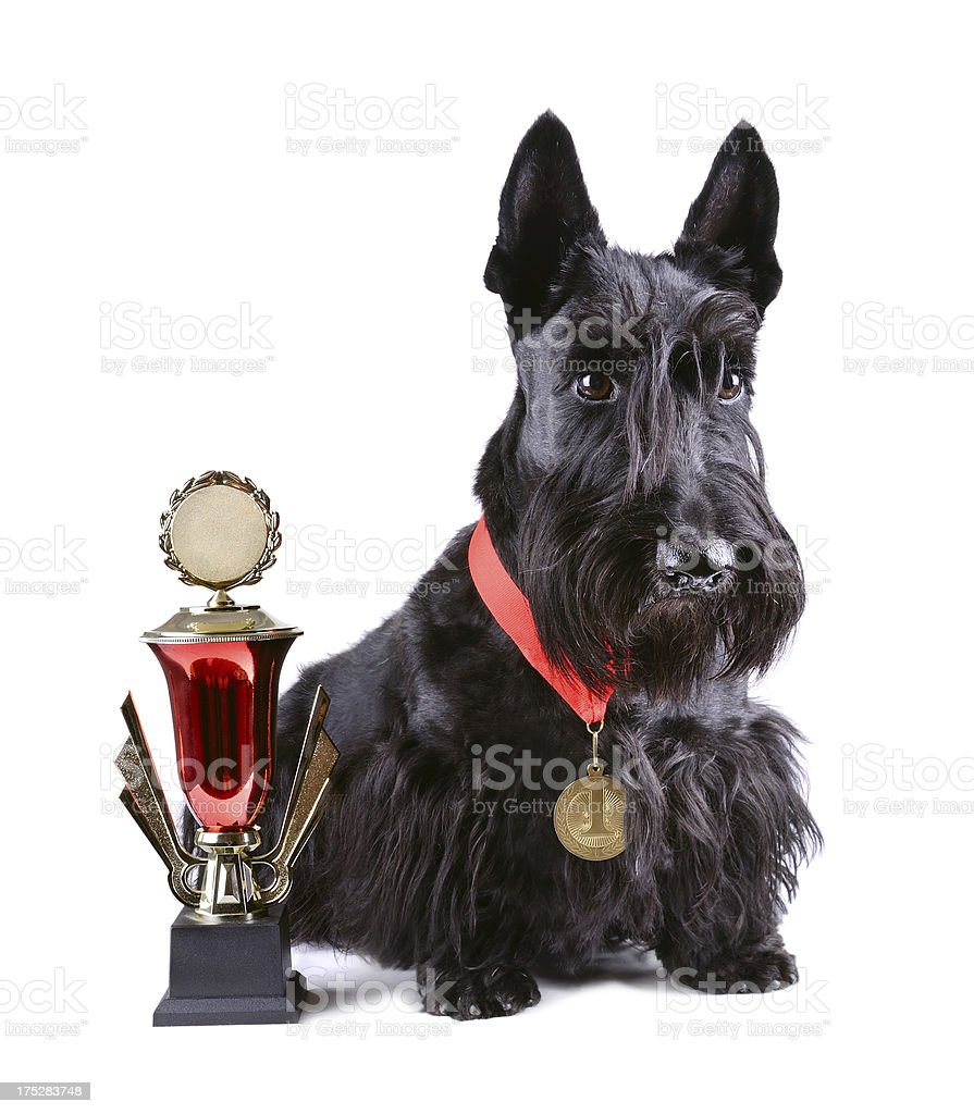 Dog with medal stock photo