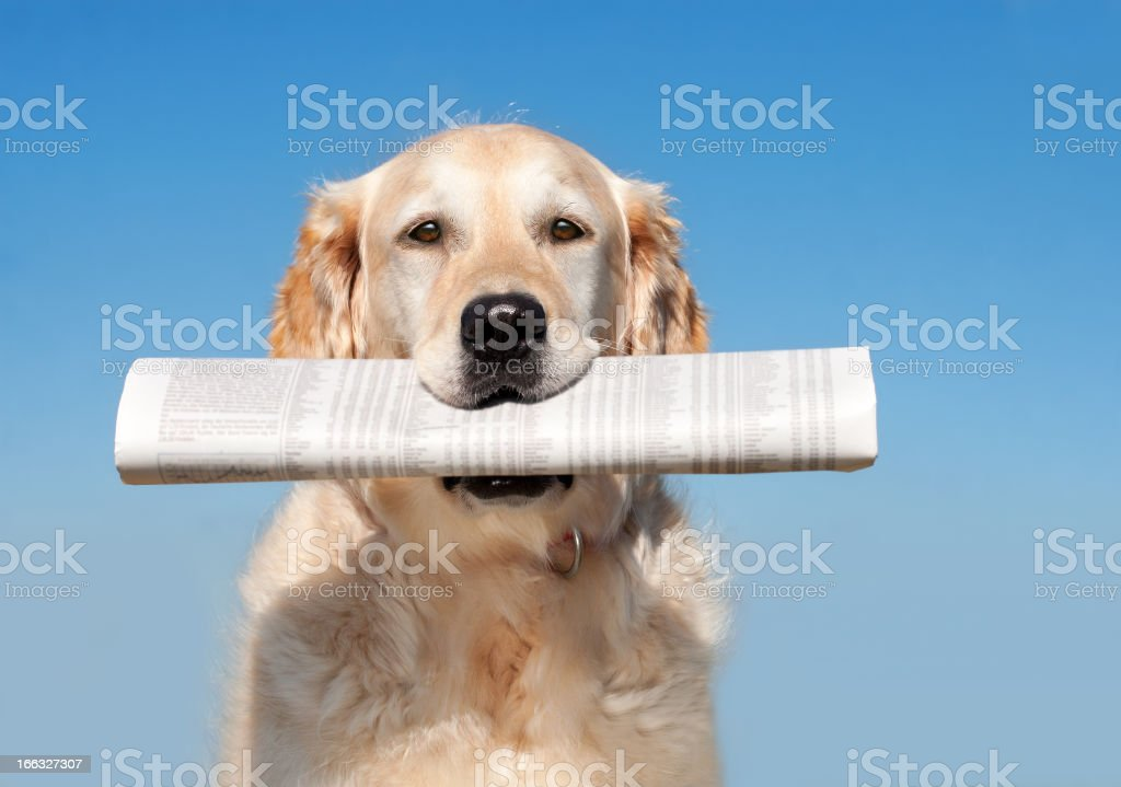 Dog with Newspaper stock photo
