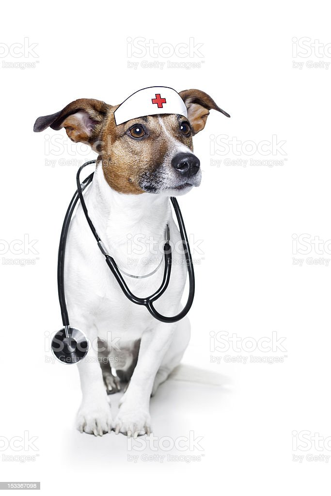 Dog with nurse hat and stethoscope stock photo