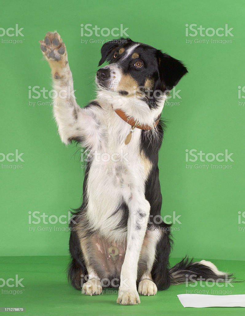 Dog with paw stock photo