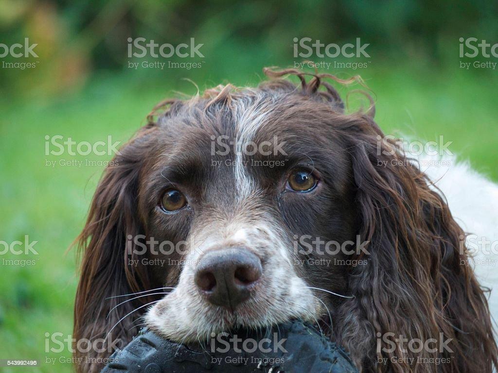 Dog with playful eyes stock photo