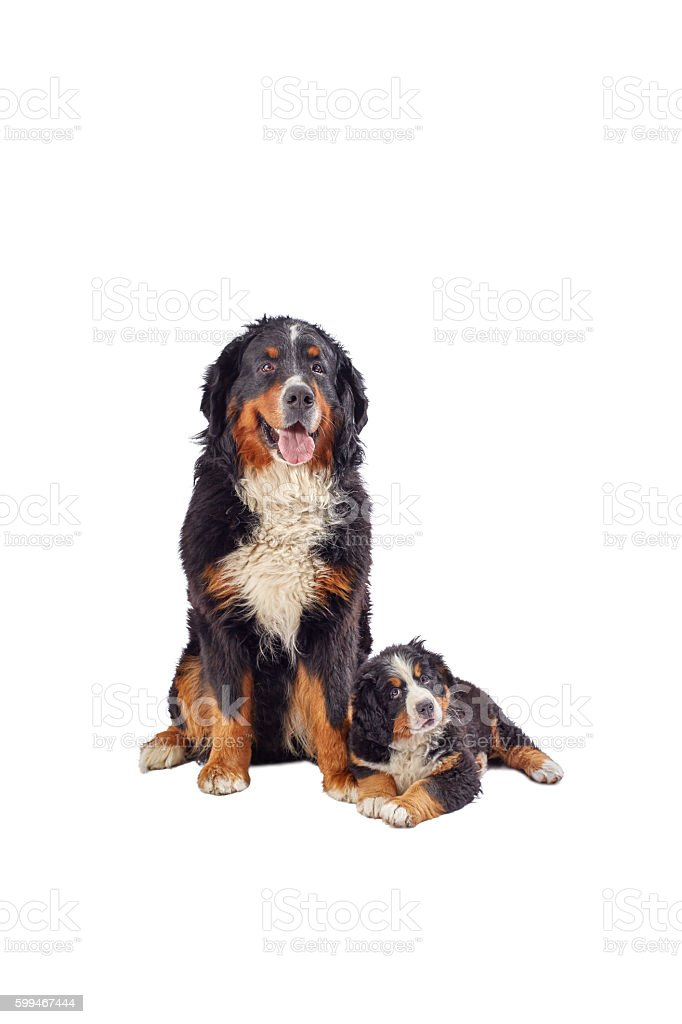 dog with puppy stock photo