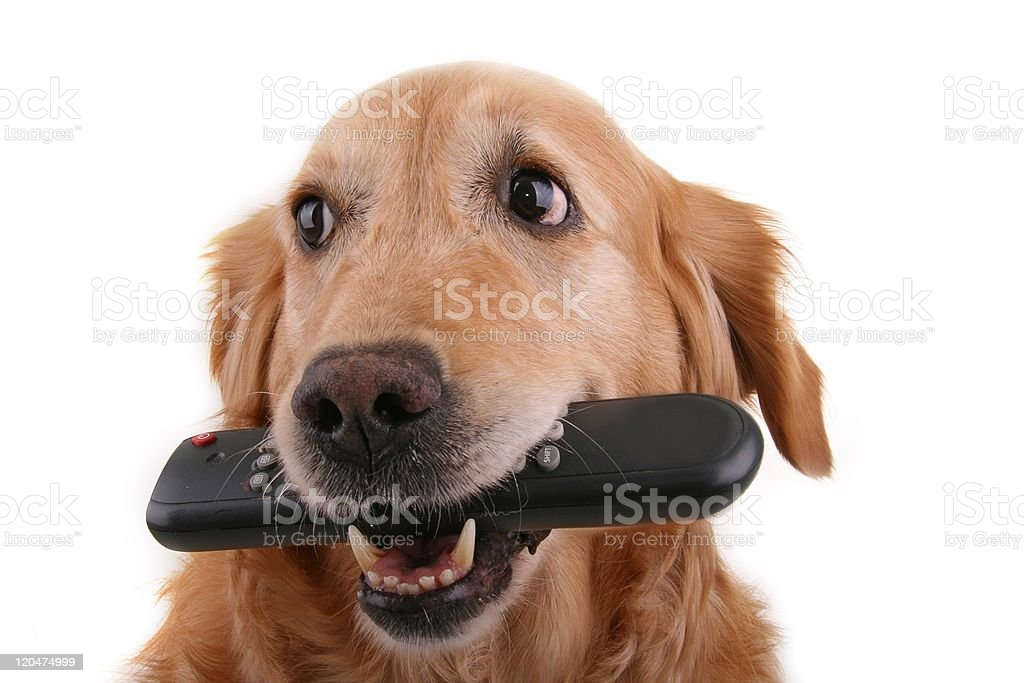 dog with remote control royalty-free stock photo