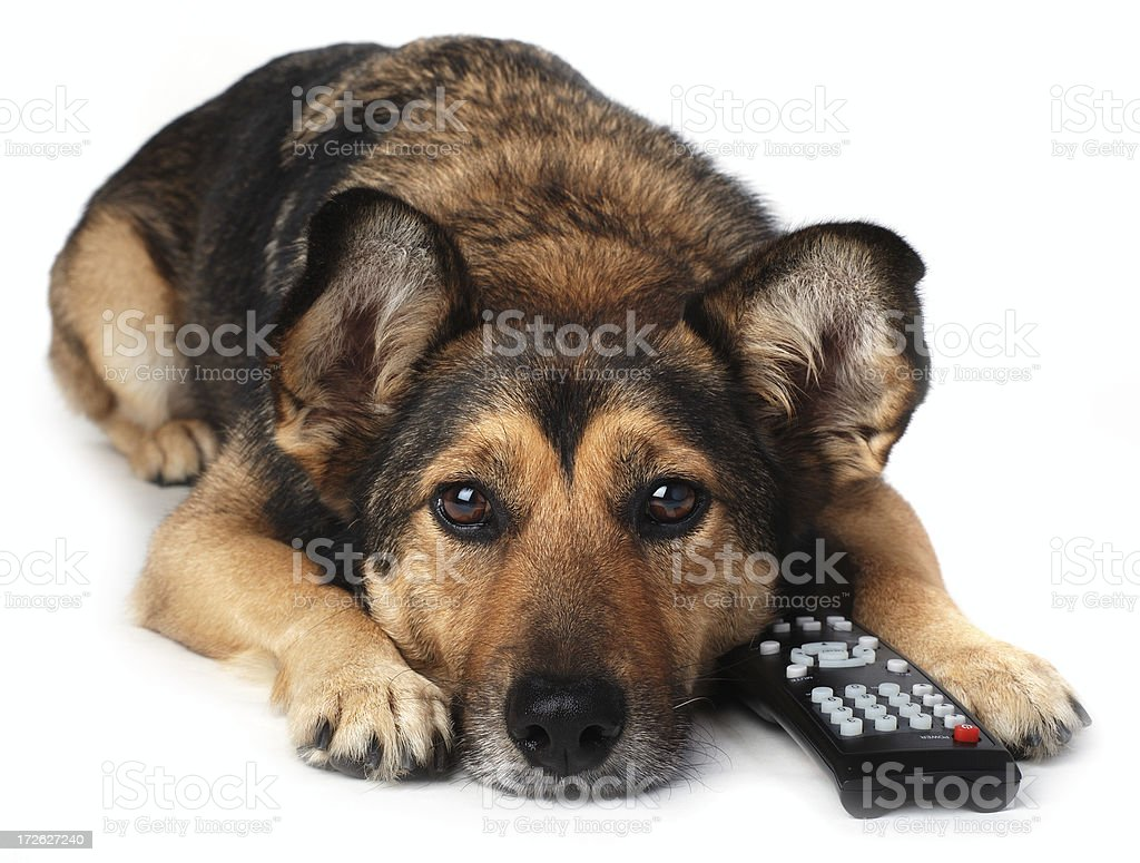 Dog With Remote Control stock photo