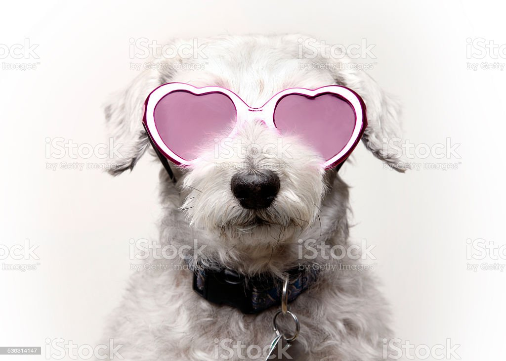 Dog with Rose Colored Glasses stock photo
