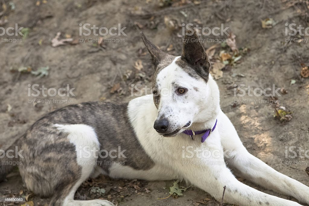 Dog With Sad Expression stock photo