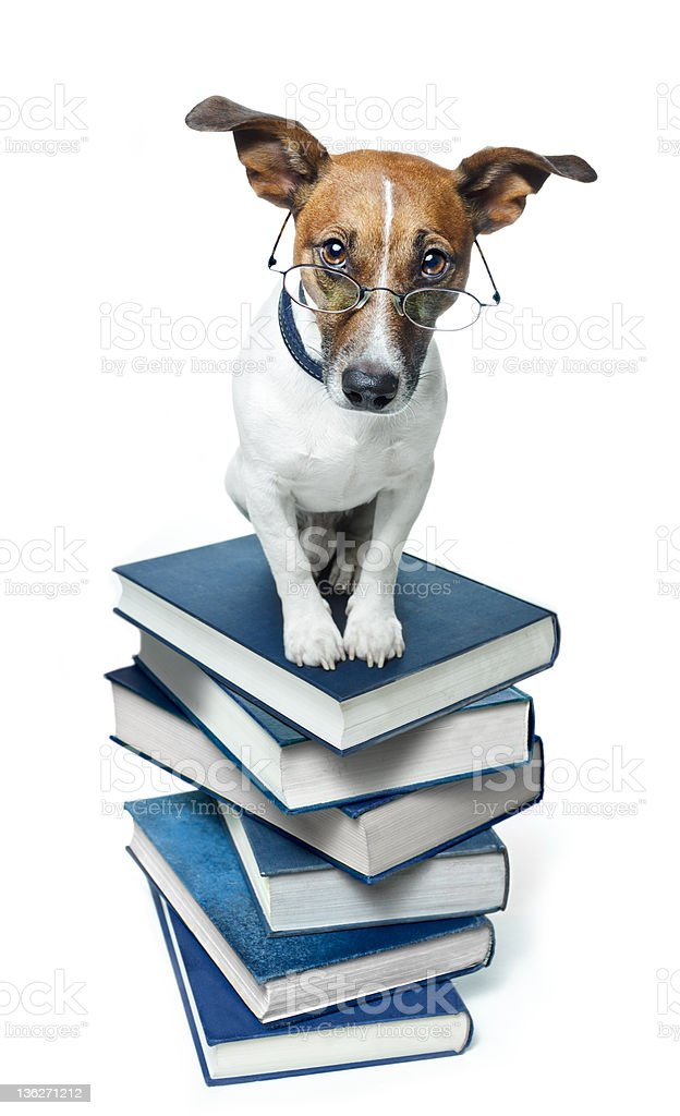 A dog with spectacles on top of a stack of blue books royalty-free stock photo