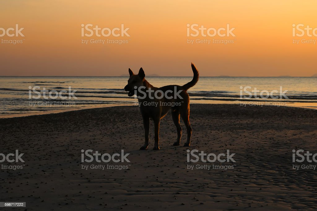 Dog with sunset on the beach. stock photo