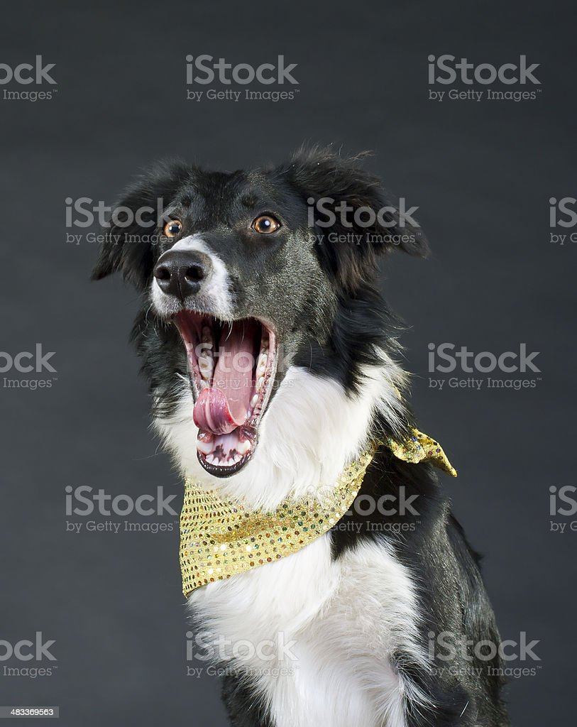 Dog with surprised expression stock photo