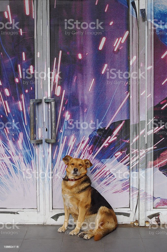 dog with the explosion background royalty-free stock photo