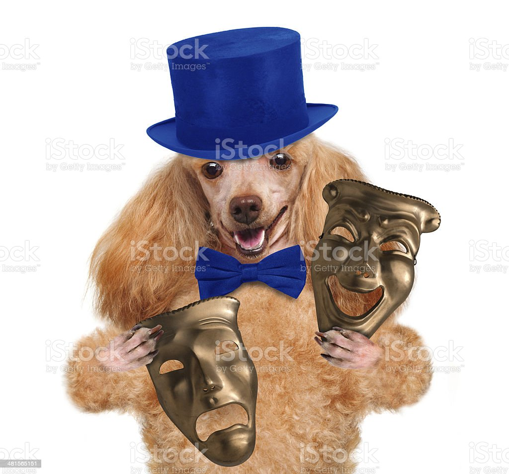 Dog with theatrical masks stock photo