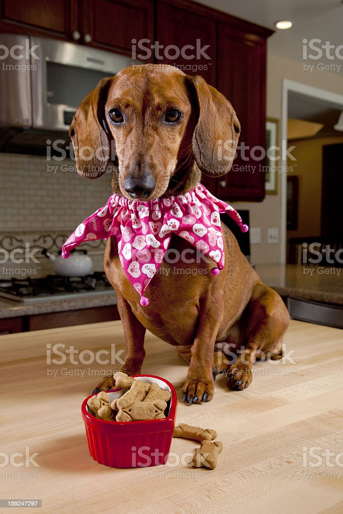 Dog with treats in heart shaped bowl royalty-free stock photo