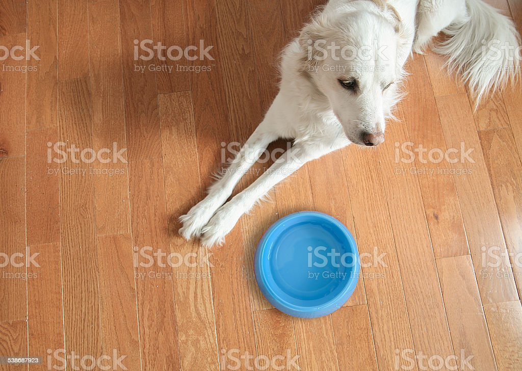Dog with water dish stock photo