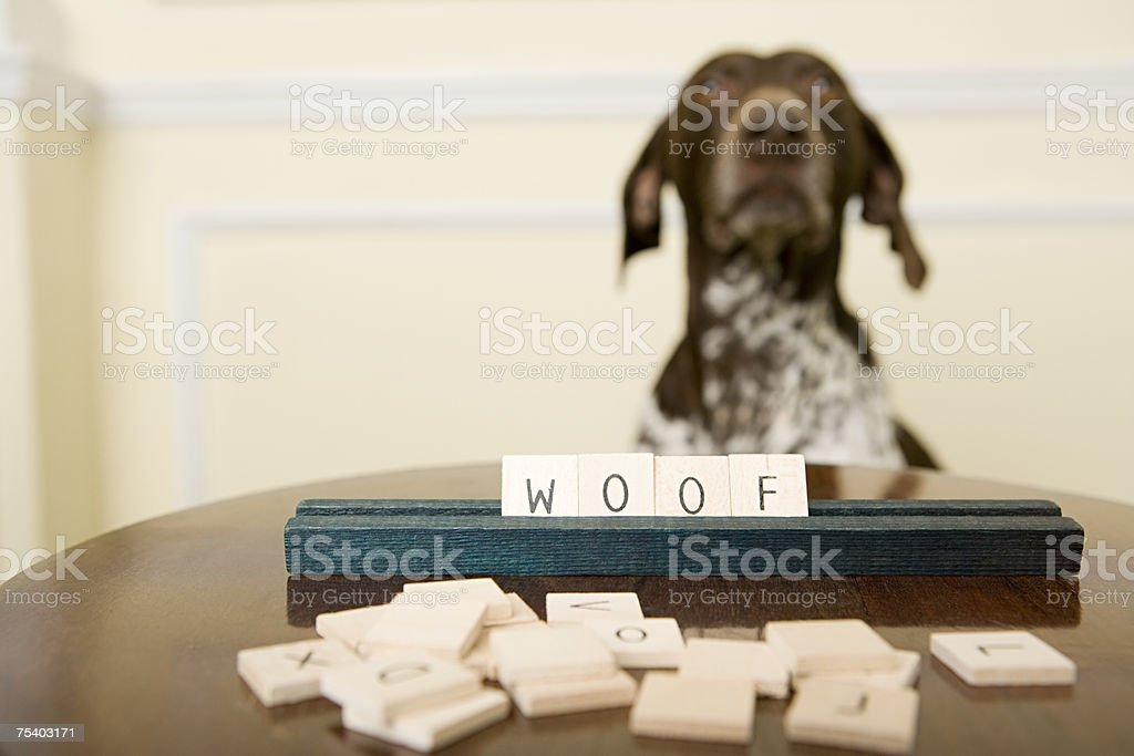 Dog with word game stock photo