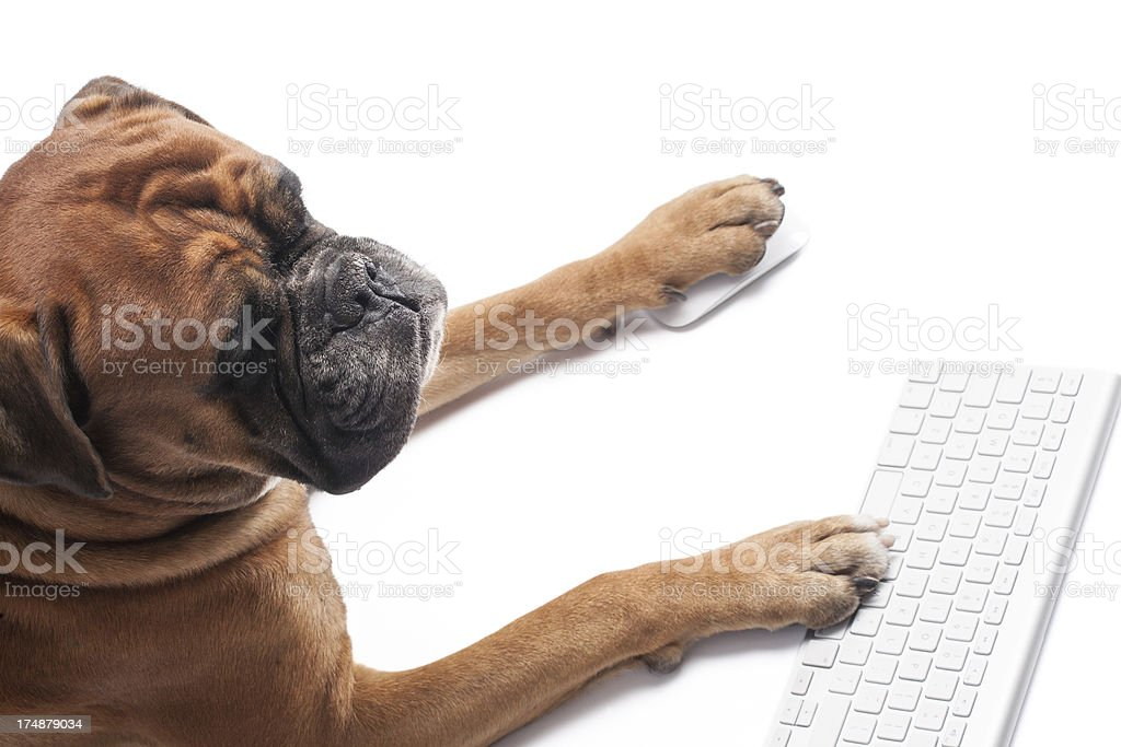 Dog working on computer royalty-free stock photo