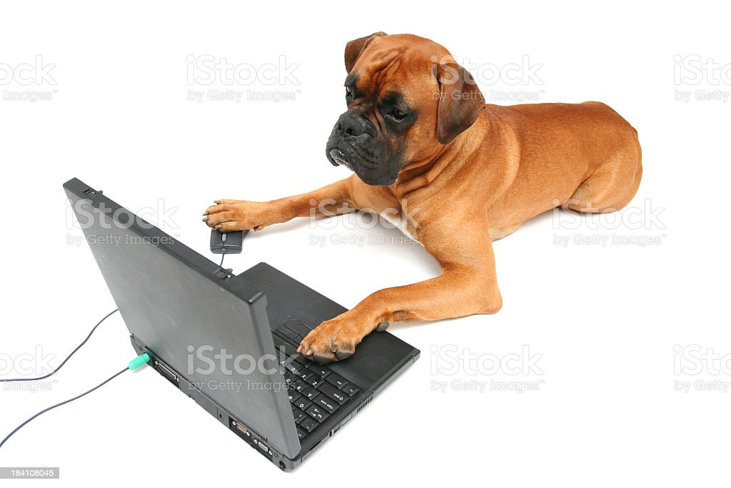 Dog working on laptop royalty-free stock photo