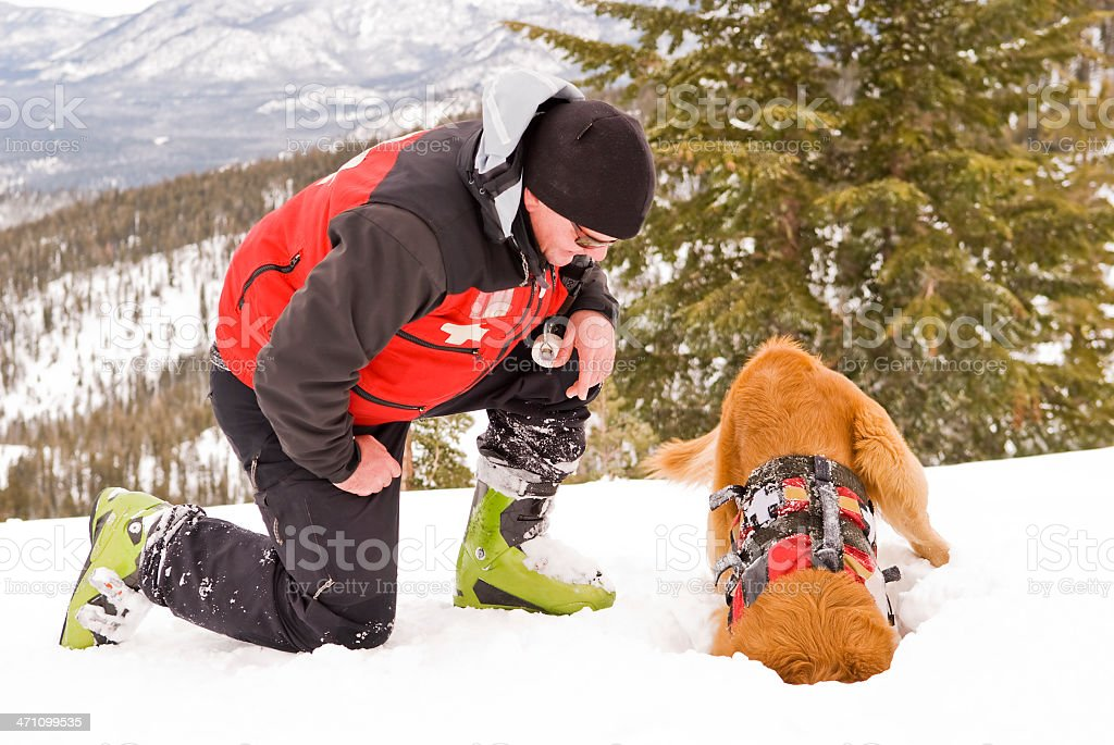 Dog Working stock photo