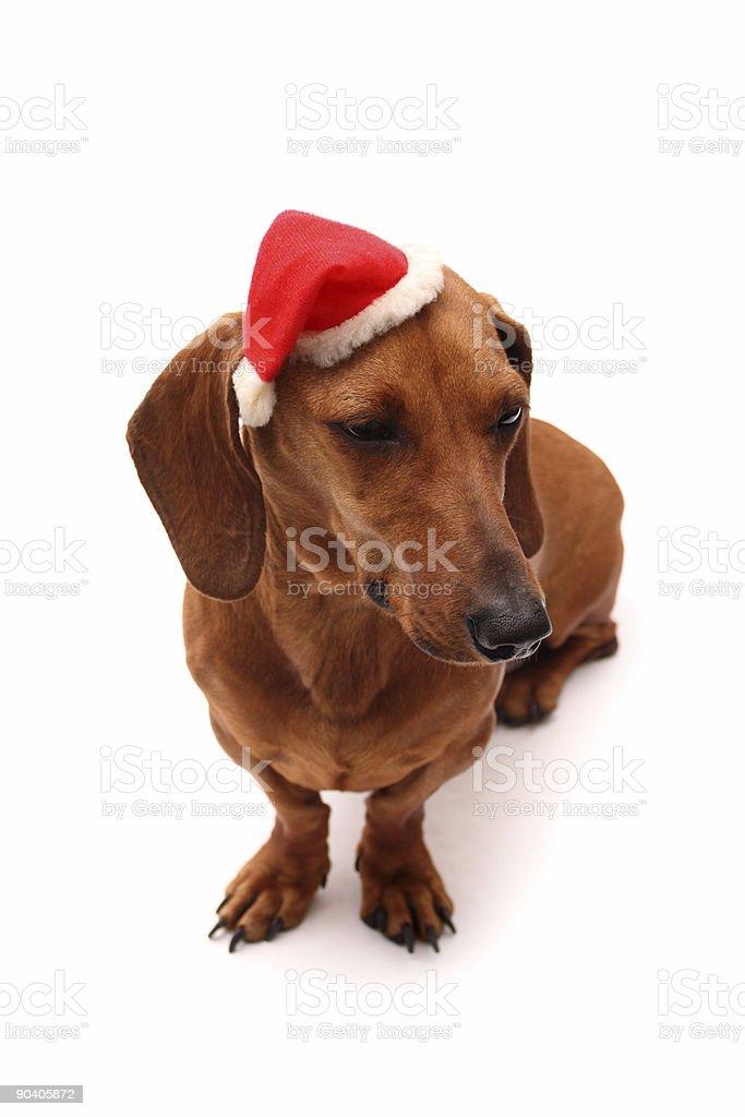 Dog xmas royalty-free stock photo