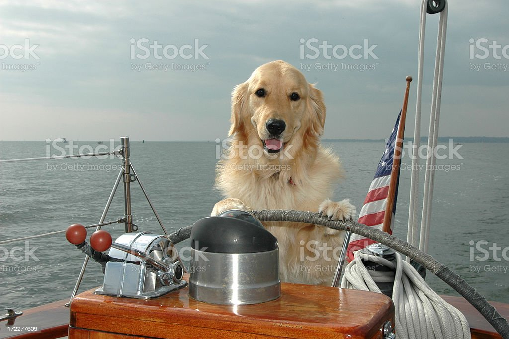Dog Yachting royalty-free stock photo