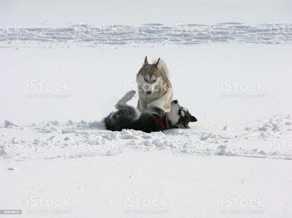Doggery royalty-free stock photo