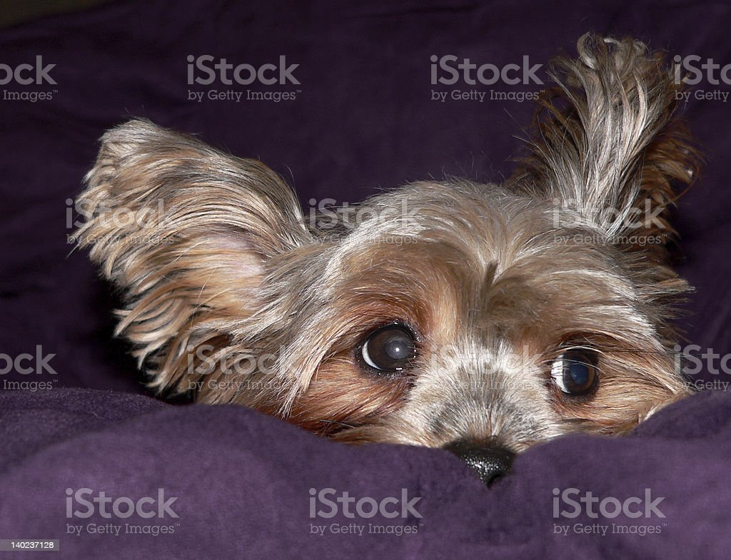 Doggie Expressions. stock photo