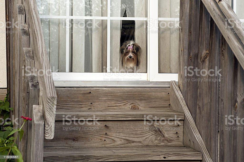 doggie in the window stock photo