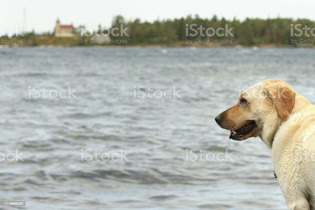 Doggie Vacation stock photo