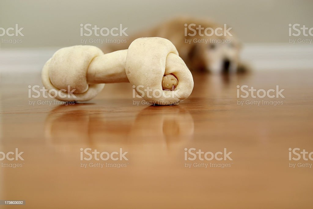Doggie want a bone. royalty-free stock photo