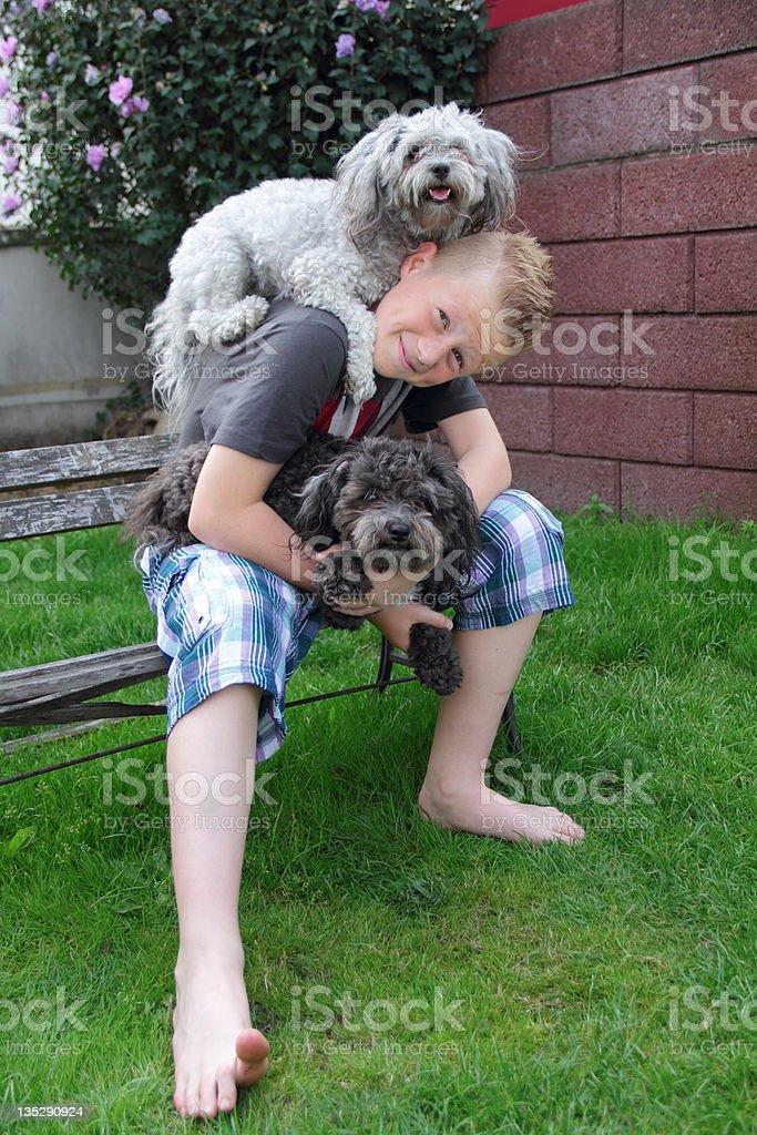 doggies piggyback stock photo