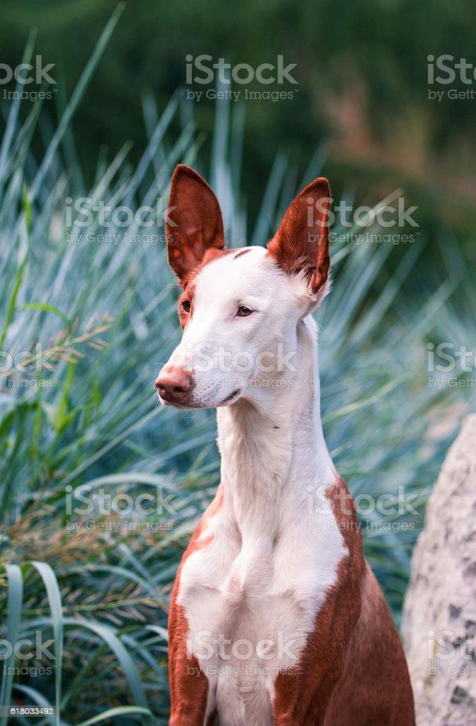 Dog-goddess stock photo