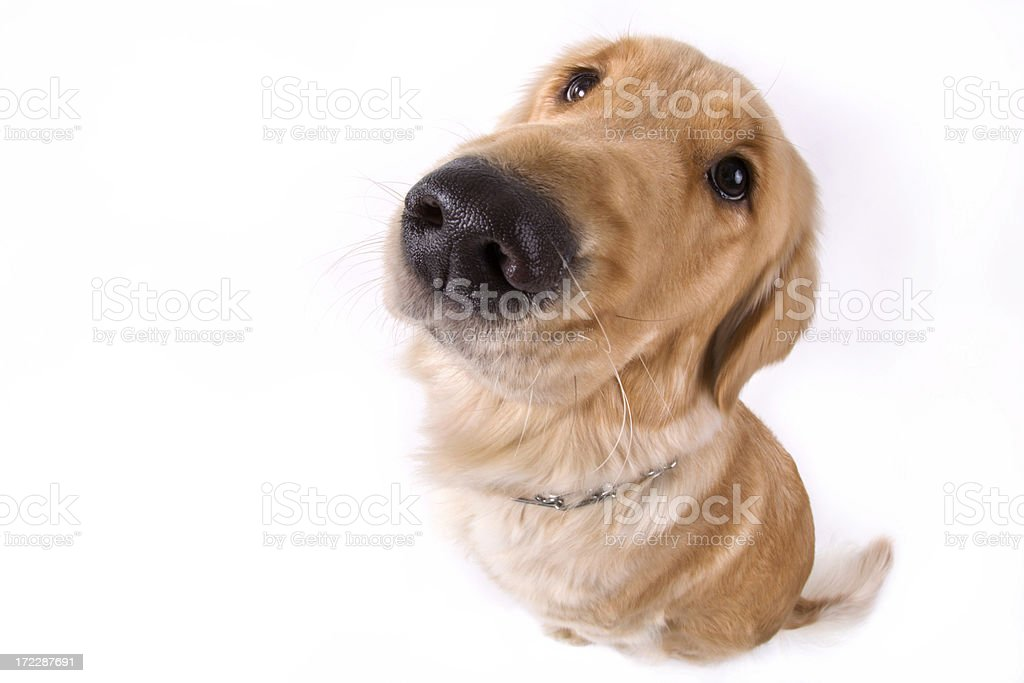 DOG-gone Fishy stock photo