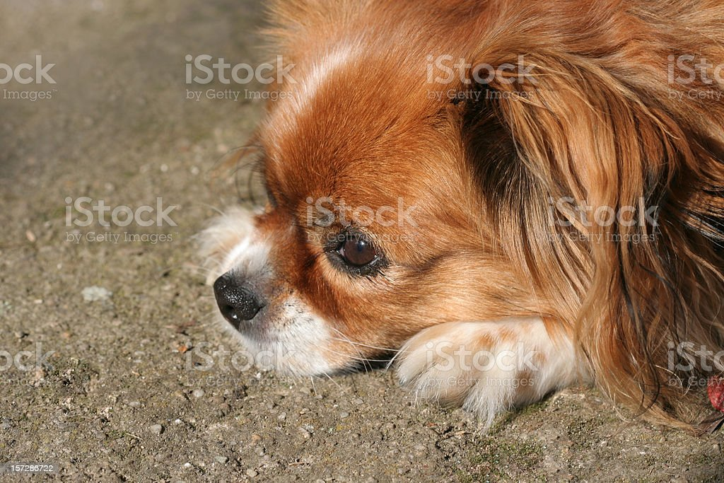 Doggy day stock photo