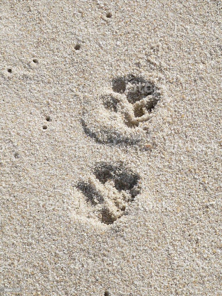 doggy footprints royalty-free stock photo