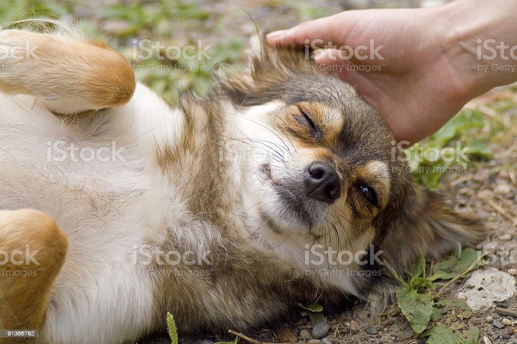 Doggy Gets Pleasure royalty-free stock photo