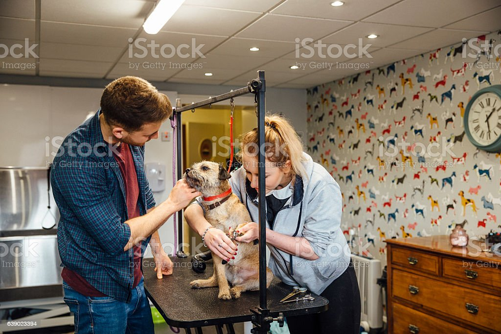 Doggy Pedicure stock photo