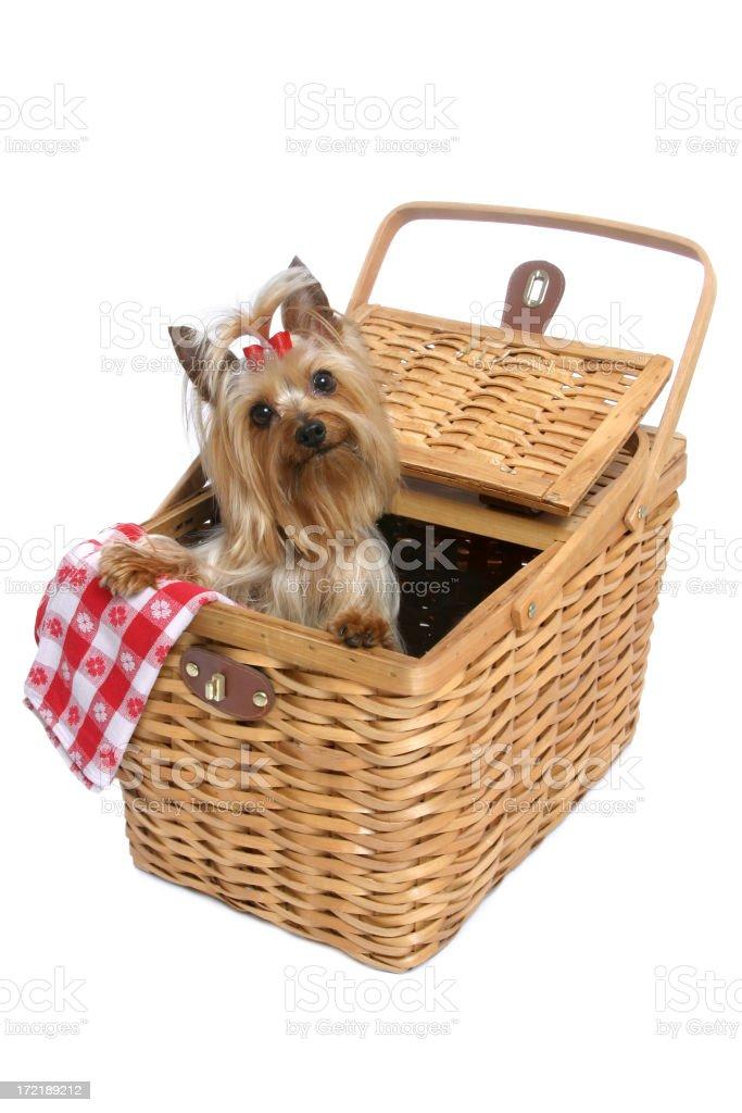 Doggy Picnic Series royalty-free stock photo
