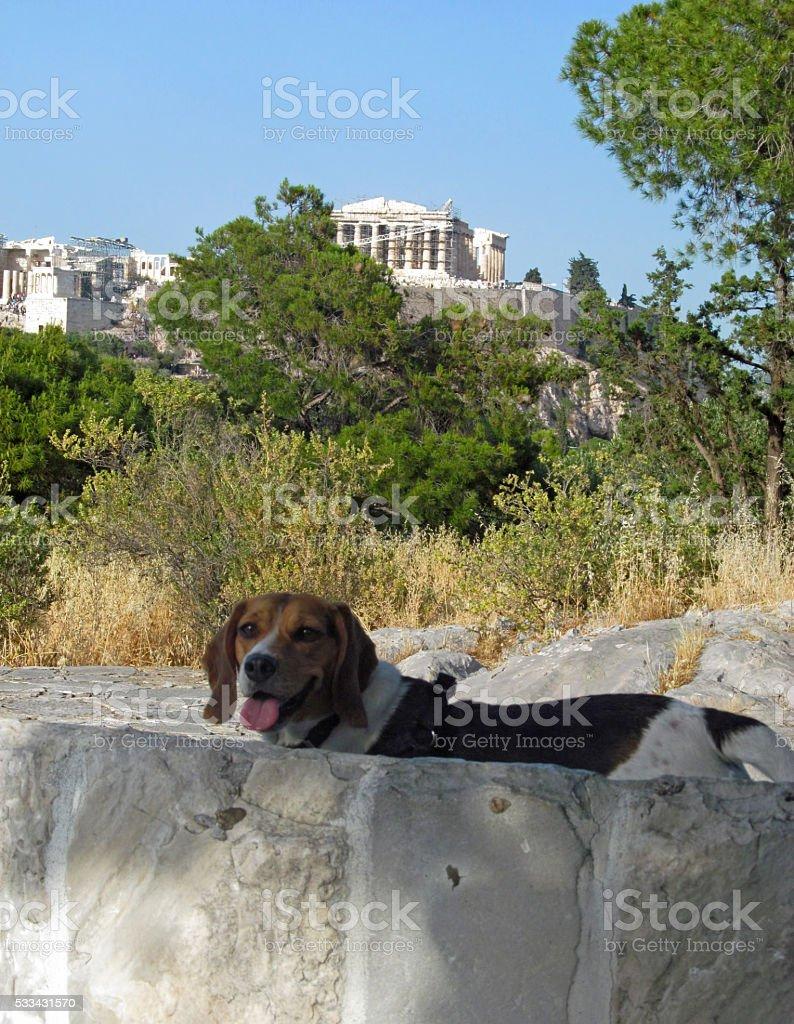 Doggy sightseeing - Athens stock photo