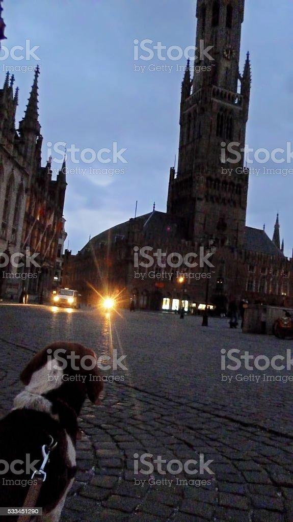 Doggy sightseeing - Bruges stock photo