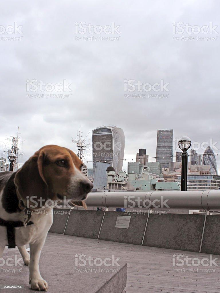 Doggy sightseeing - London stock photo