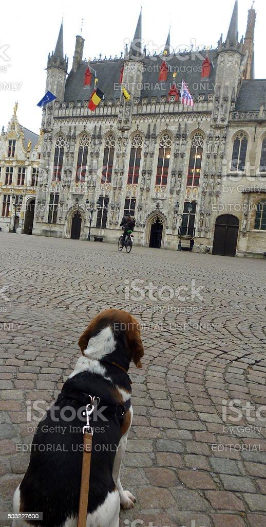 Doggy sightseeing stock photo