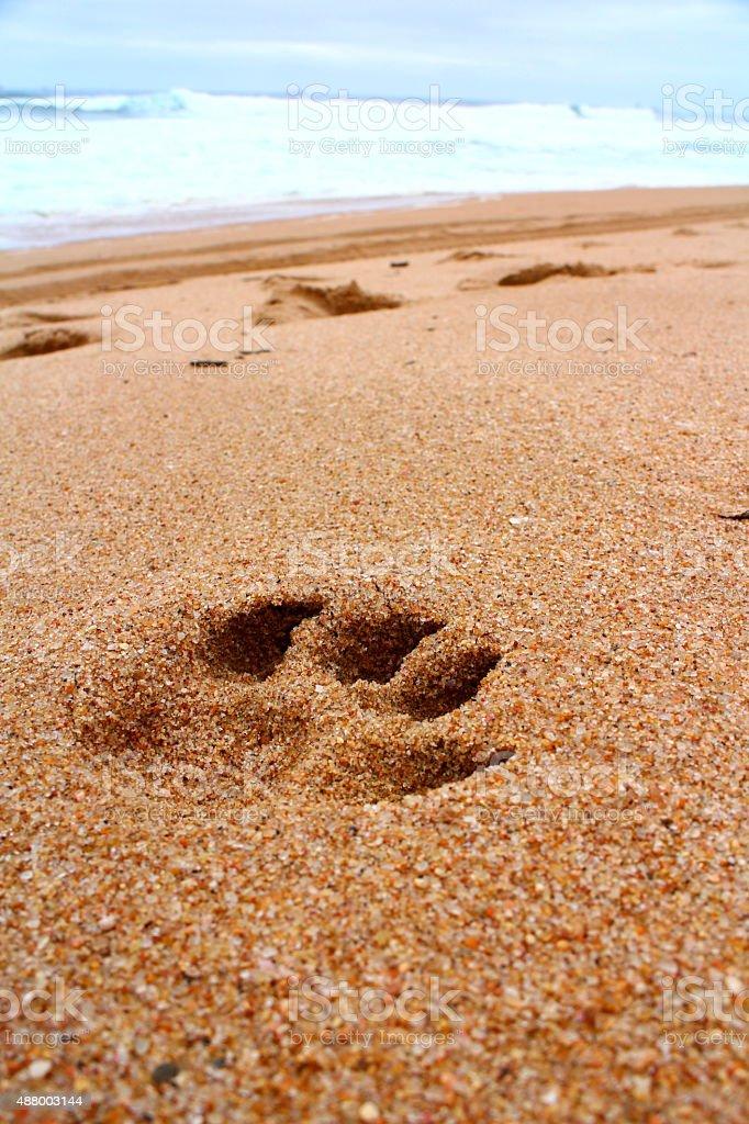 dogprint on the beach stock photo