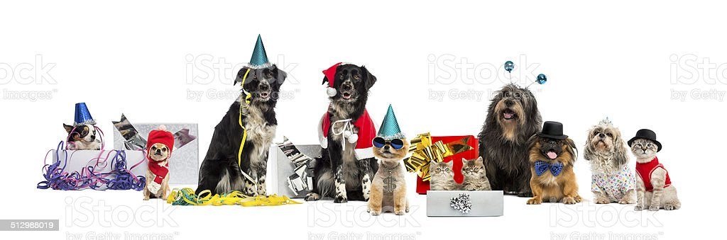 Dogs and a cat partying stock photo