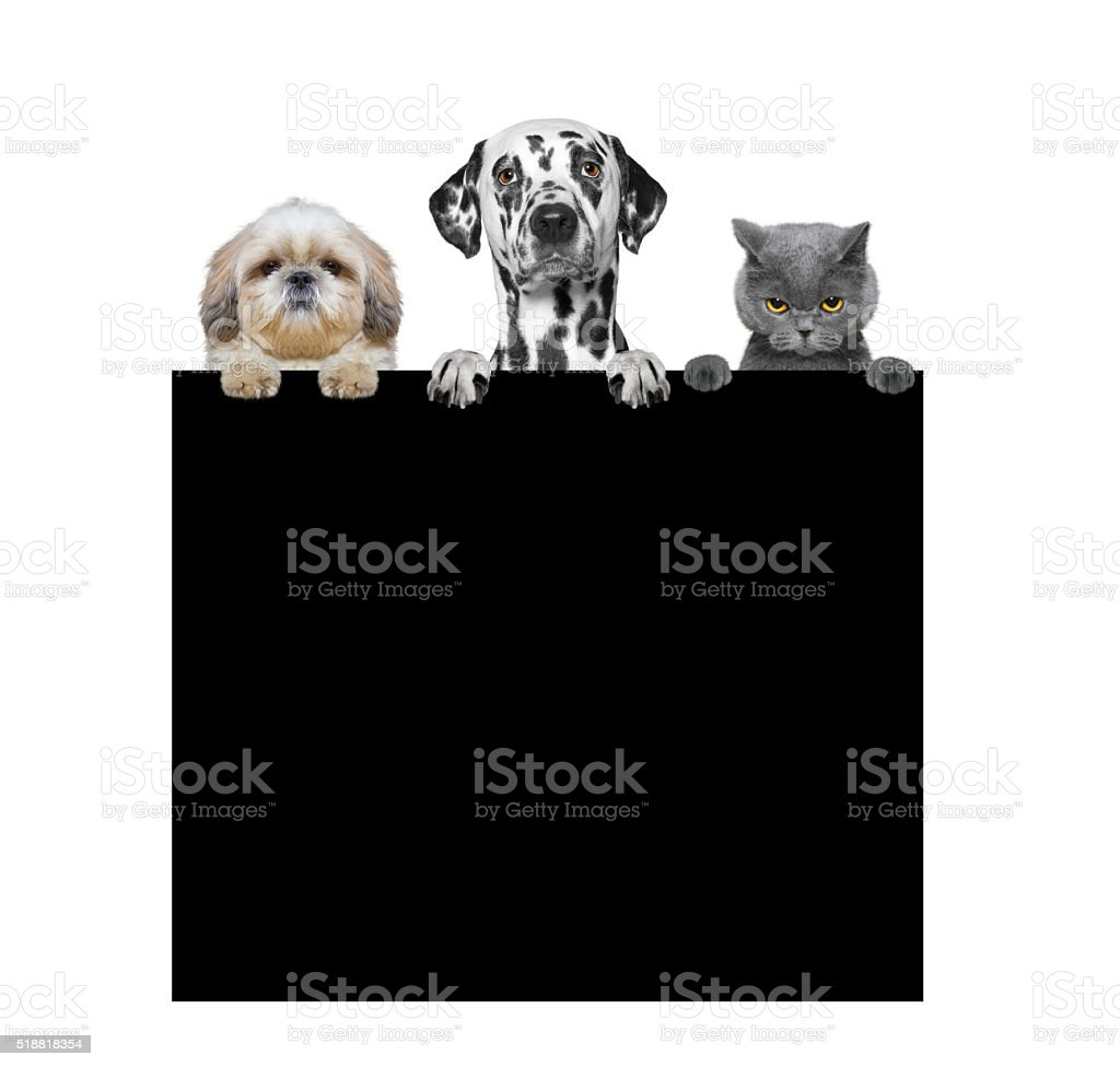 dogs and cat holding a frame in their paws stock photo